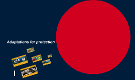 Adaptations for protection