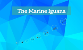 The Marine Iguana