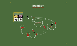 Definició d'invertebrats.