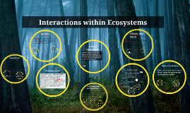 Copy of Interactions within Ecosystems