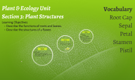Plant & Ecology Unit: Section 3 Plant Structures