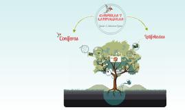 Copy of coniferas y latifoliadas