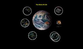 Copy of Copy of Web of Life