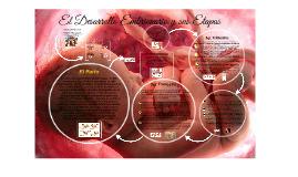 Copy of  El Desarrollo Embrionario y sus Etapas