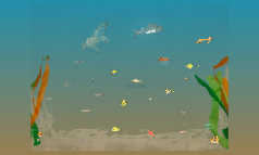 Ocean of Second Graders
