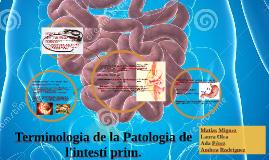 Terminologia de la Patologia de l'intestí prim