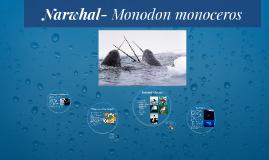 Narwhal- Monodon monoceros
