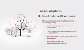Fungal Adaptations Old