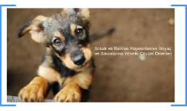 Sokak ve Barınak Hayvanlarının İhtiyaç ve Sorunlarına yöneli