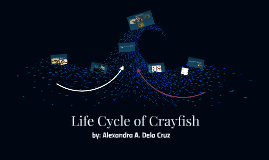 Life Cycle of Crayfish
