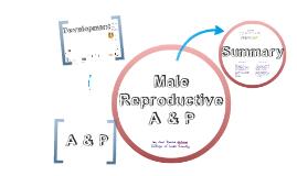 Male Reproductive A & P