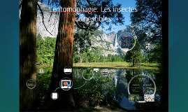 Copy of L'enthomophagie: Les insectes commestibles