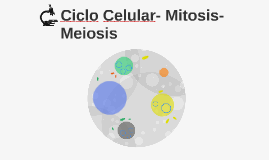 Ciclo Celular- Mitosis- Meiosis