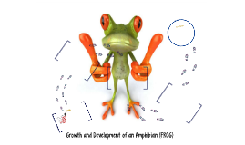 Growth and Development of an Amphibian (FROG)