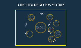 Circuito De Accion Motriz By On Prezi