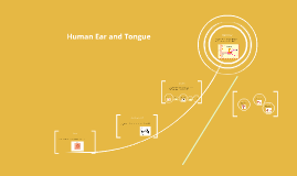 Human Ear and Tongue