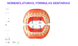 Copy of NOMENCLATURAS, FORMULAS DENTARIAS