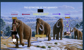 Extinction of Mammoths 2 (Humans or Climate)