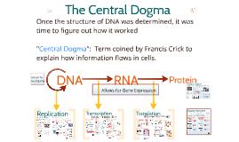 Genetics 2: Replication-Transcription-Translation: The Central Dogma