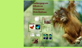 Anthropogenic Effects on Orangutan Distributions
