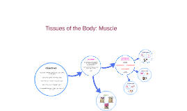 Copy of Tissues of the Body: Muscle