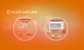 El nucli cel·lular