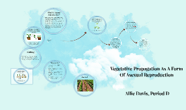 Vegetative Propagation As A Form Of Asexual Reproduction