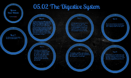 05.02 The Digestive System