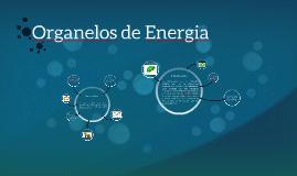 Organelos de Energia
