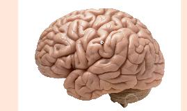 Neurologie en anesthesie 2015