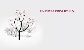 LOS PHYLA PRINCIPALES