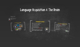 Language Acquisition & The Brain
