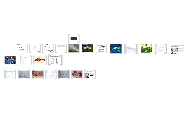 Copy of Aparato reproductor  en peces y tiempo de gestación