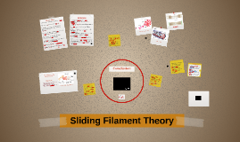 The structure of the muscle and sliding filament theory
