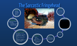 The Sarcastic Fringehead