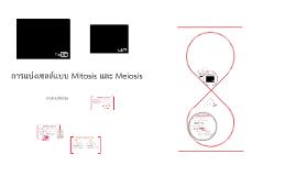 การแบ่งเซลล์แบบ Mitosis และ Meiosis