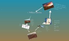 yellow tundra