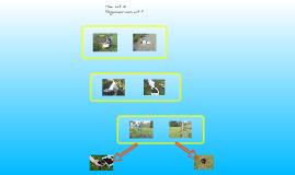 Copy of Regenwormen Handleiding