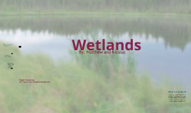 Nicolas and Matthew's Wetlands Prezi