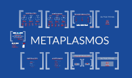 PANAMBI-METAPLASMOS