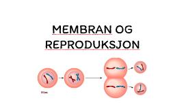 membran og reproduksjon