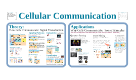AP Bio 5: cell Communication