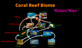 Copy of Coral Reef Food Web