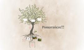 Copy of Pomarańcze!