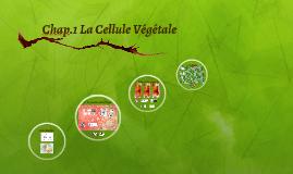 Biologie Végétale 1 Chap1 Cellule