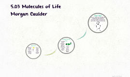 5.03 Molecules of Life
