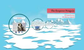 Emperor Penguins--Jacobi Simmons