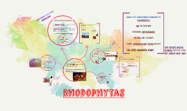 Rhodophytas