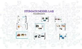 STOMACH MODEL LAB