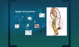 Anticuerpos: son inmunoglobulinas, proteínas que neutralizan